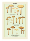 Edible Fungi: Half Red Cortinarius Wall Decal