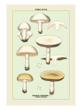 Edible Fungi: Common Mushroom Wall Decal