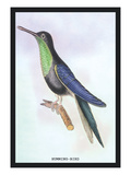 Humming-Bird Wall Decal by Sir William Jardine