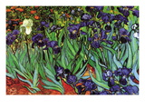 Iris Wallsticker af Vincent van Gogh