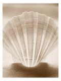 Luminescent Irish Deep Seashell Wallstickers