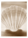 Luminescent Irish Deep Seashell Wall Decal