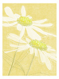 Daisies in Gold Muursticker