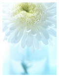 White Anemone Dahlia I Wall Decal