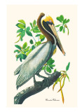 Brown Pelican Wall Decal by John James Audubon