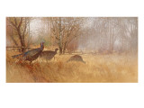 Wild Turkeys Wall Decal