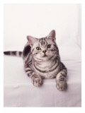 Finnegan the Cat III Wall Decal