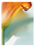 Dark Orange Lily Profile Wall Decal