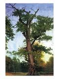 Pioneers of The Forest Autocollant mural par Albert Bierstadt