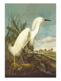Snowy Egret Wall Decal by John James Audubon