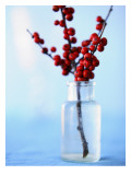 Winterberry Holly Wall Decal