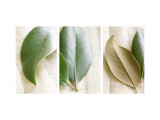 Leaves and Muslin Triptych Muursticker