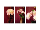 Pink Dalias Triptych Wall Decal
