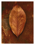 Shiny Leaf in Rust Wall Decal