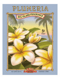 Plumeria Wall Decal by Kerne Erickson