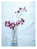 Wildflower Bouquet Wall Decal