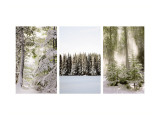 Winter Forest Triptych Wall Decal