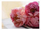 Peonías rosas Vinilo decorativo