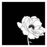 Black and White Print with Large White Flower Wall Decal