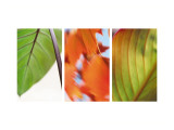 Leaves&#39; Journey Triptych Wall Decal
