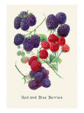 Red and Blue Berries Wall Decal