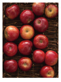 Autumn Apple Basket Wall Decal
