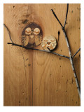 Wood Owl Knots Wall Decal