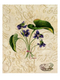 Vintage African Violets with Toad Vinilos decorativos
