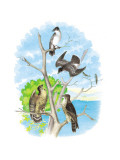 The Kingbird Wall Decal by Theodore Jasper