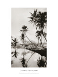 Coco Palms, Honolulu, 1935 Wall Decal