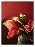 Ruby Tulips Brown Vase Wall Decal