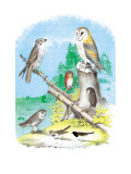 American Lanier Falcon Wall Decal by Theodore Jasper