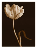 Tulip Dance Wall Decal