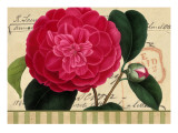 Pink Flower on French Postcard Wall Decal