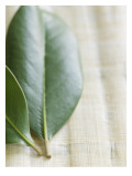 Magnolia Leaves II Wall Decal