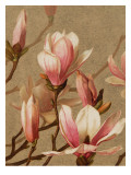 Pink Magnolia Wall Decal