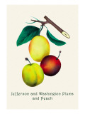 Jefferson and Washington Plums and Peach Wall Decal