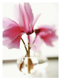 Fuchsia Blossoms in Clear Vase Wall Decal
