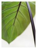 Tropical Leaf Wall Decal