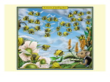 A Swarm of Spelling Bees Wall Decal by Richard Kelly