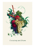 Creveling Grapes and Plums Wall Decal
