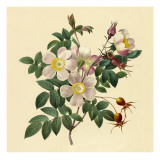 White Floral Illustration Wallstickers