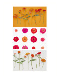 Zinnias Triptych Wall Decal
