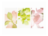 Pink Dogwood Triptych Wall Decal