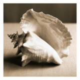 Sea Shells IV Wall Decal