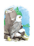 The Snow Owl Wall Decal by Theodore Jasper