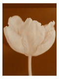 Tulip Serenity Wall Decal