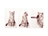Kitty's Approach Triptych Wall Decal
