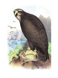 Sea Eagle Wall Decal by Theodore Jasper