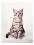 Finnegan the Cat I Wallstickers